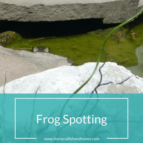 Frog Spotting   Horseradish & Honey